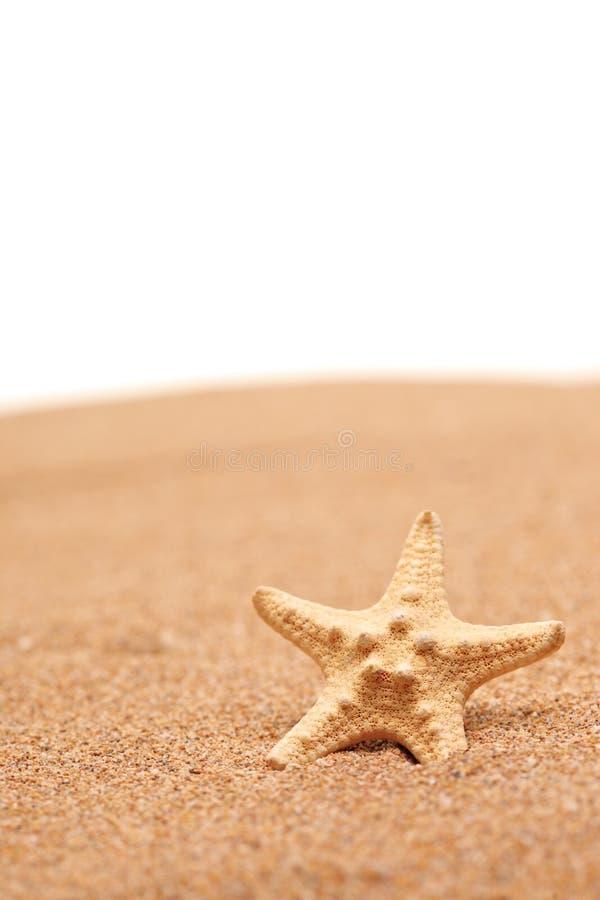 взгляд звезды моря пляжа песочный стоковые фотографии rf