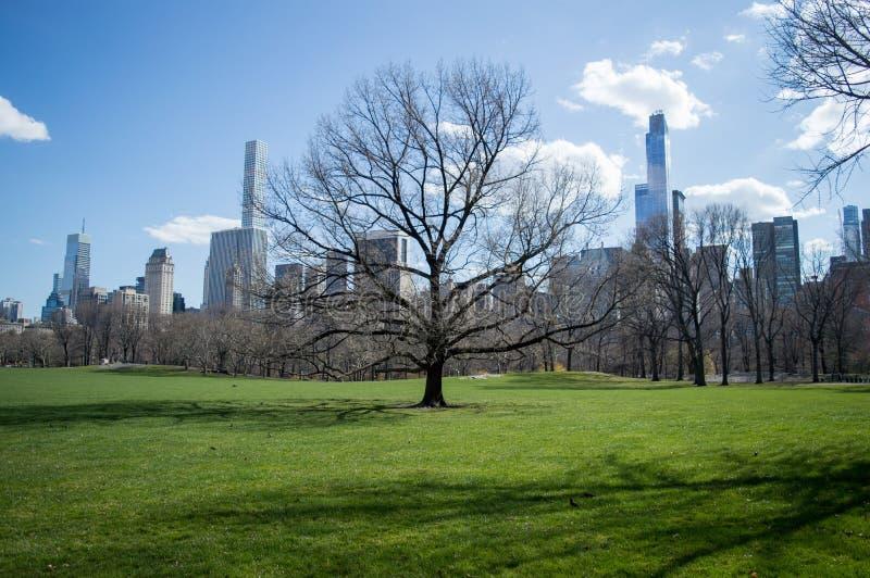 Взгляд известного горизонта Central Park и Нью-Йорка на солнечный день в предыдущей весне с чуть-чуть деревом, NY, США стоковые изображения