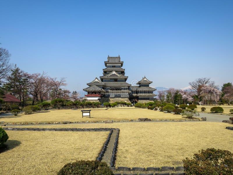 Взгляд красивого замка вороны Мацумото через лужайку ландшафта с предпосылкой горы снега и голубого неба во время весеннего време стоковая фотография