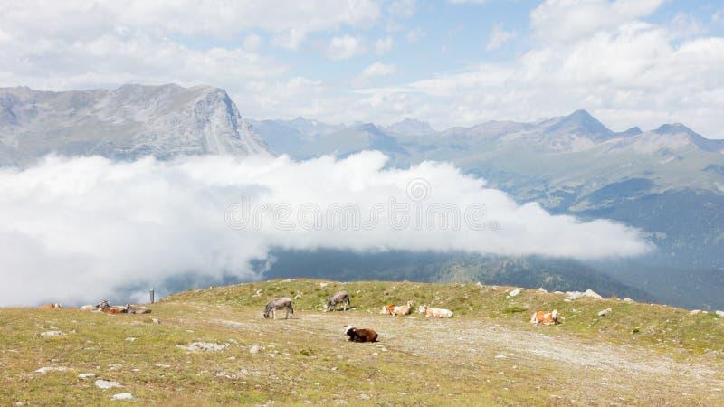 Взгляд красивого ландшафта в Альпах стоковые фотографии rf