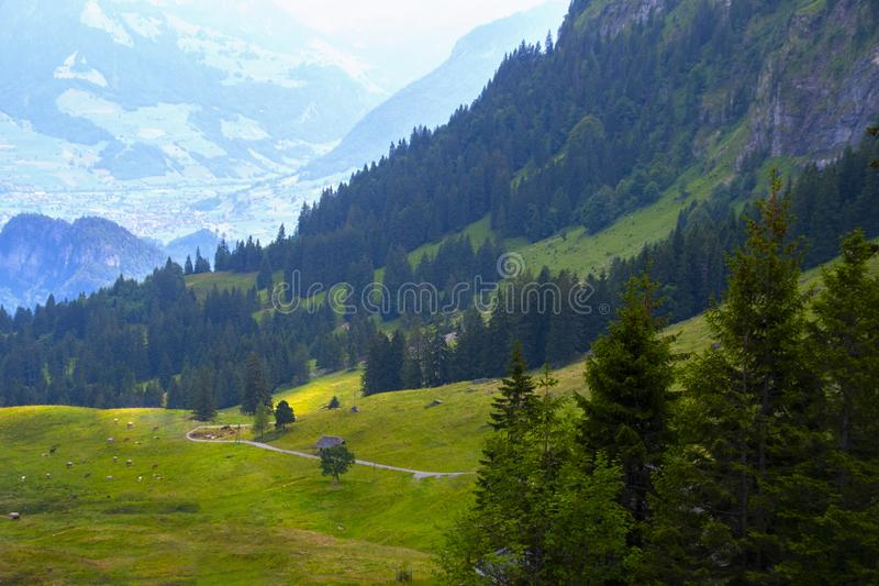 Взгляд красивого ландшафта в Альп со свежими зелеными лугами и коровами в поле стоковое изображение