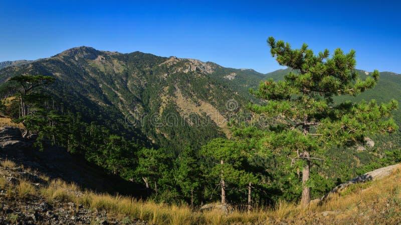 Взгляд красивого ландшафта скалистых гор панорамный стоковое изображение rf