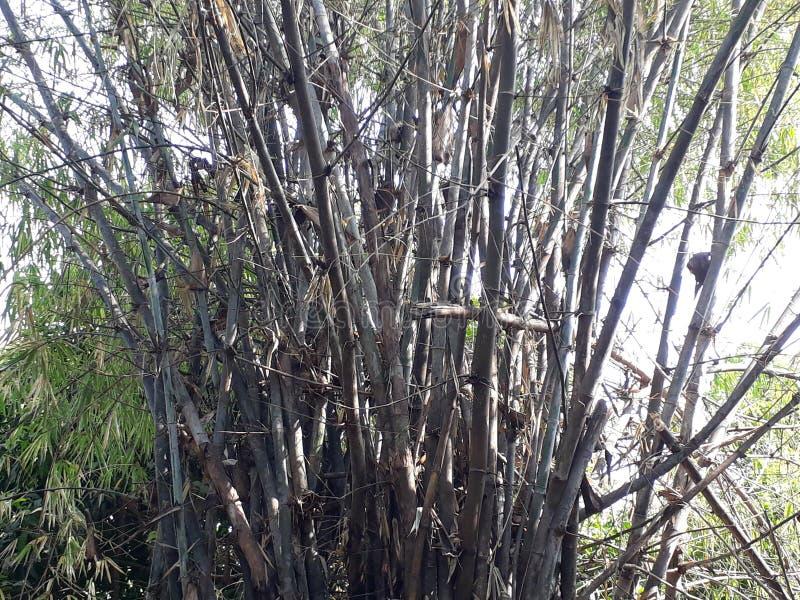 Взгляд красиво высушенных бамбуковых деревьев стоковые изображения