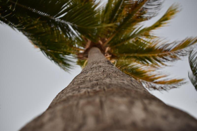 Взгляд крупного плана пальмы стоковое изображение rf