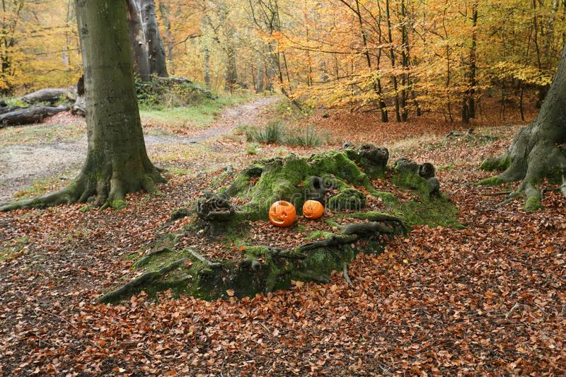 Взгляд ландшафта леса в Великобритании в осени с 2 высекаенными местами тыкв среди корней деревьев стоковое изображение