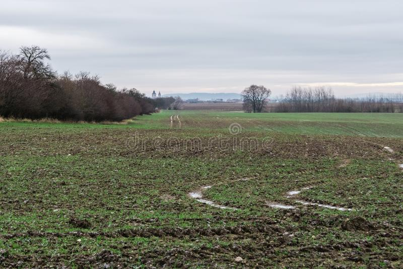 Взгляд ландшафта осени, пакостных влажных и тинных полей стоковое изображение