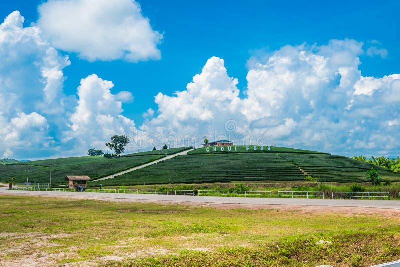 Взгляд ландшафта плантации чая на на ферме fong choui, Chiang Rai, Таиланде верхние туристские назначения стоковое изображение