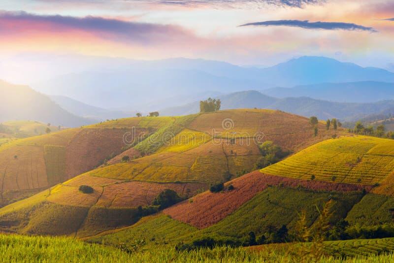 Взгляд ландшафта поля неочищенных рисов в кальяне Piang PA Baan в Chiangmai стоковая фотография rf