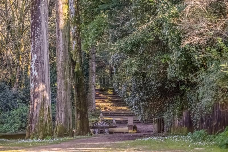 Взгляд леса на горе Buçaco, со старым фонтаном стоковое фото