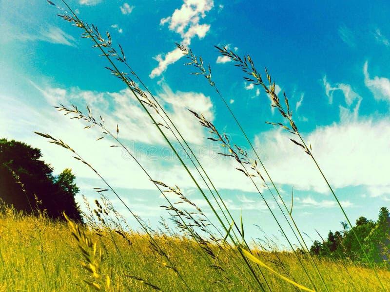 взгляд лета травы поля угла широко стоковое изображение