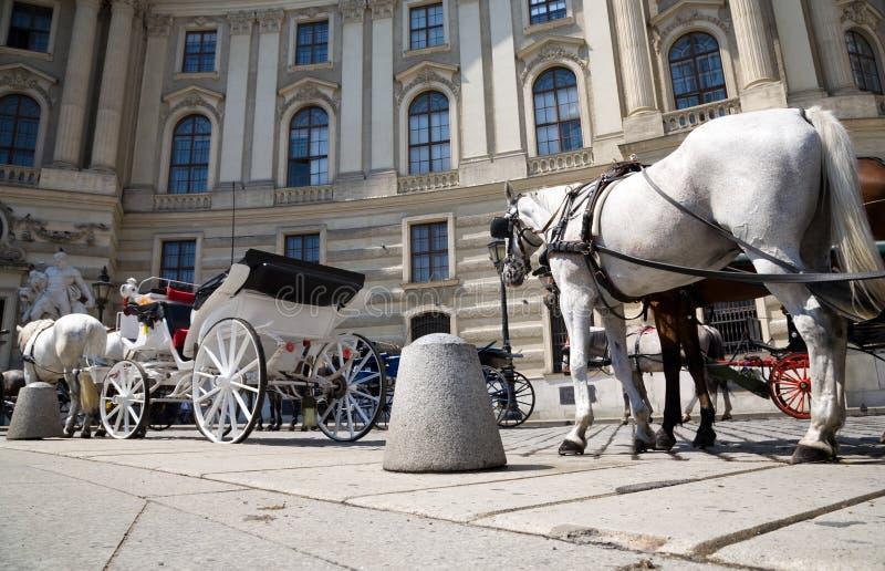 взгляд лошади кареты угла широко стоковые изображения