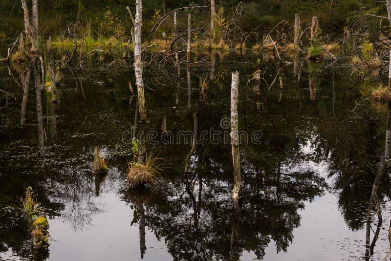 Взгляд над заболоченным местом болота и трясины стоковое изображение