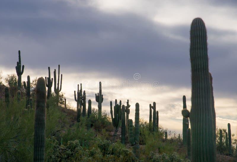 Взгляд над холмом покрытым с кактусами, пустыней sonoran около Феникса стоковое фото rf