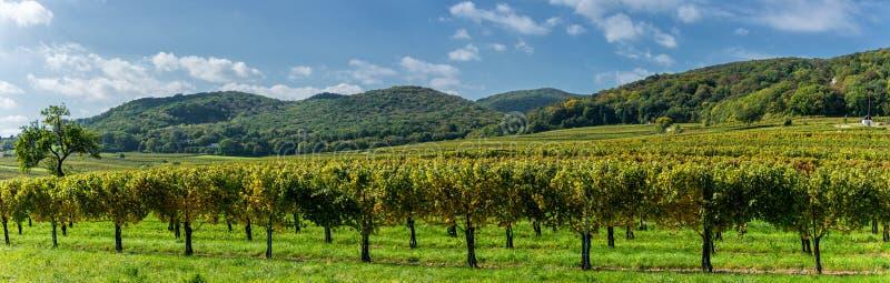 Взгляд на виноградниках Perchtoldsdor стоковое фото rf