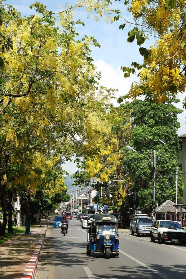 Взгляд на дороге с большим деревом с желтыми цветками, автомобилями, мотоциклами и традиционным тайским стоковая фотография