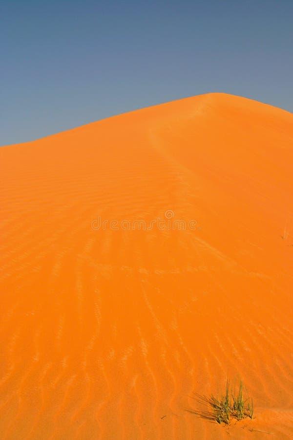 Взгляд на конусе оранжевой красной песчанной дюны против голубого неба с изолированным потерянным вихором зеленой травы стоковые изображения rf