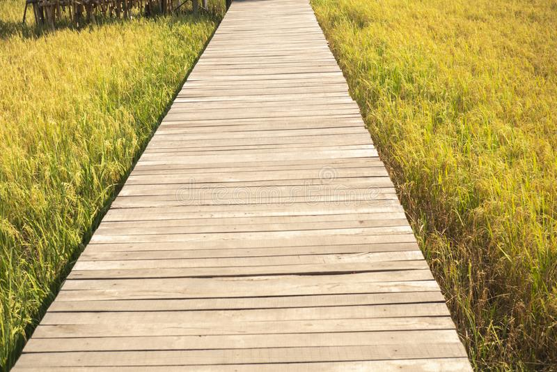 Взгляд на мосте в середине поля стоковая фотография rf