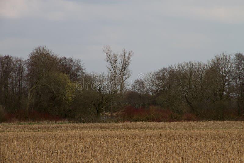 Взгляд на накошенном поле с зоной дерева как граница в emsland Германии rhede стоковое фото