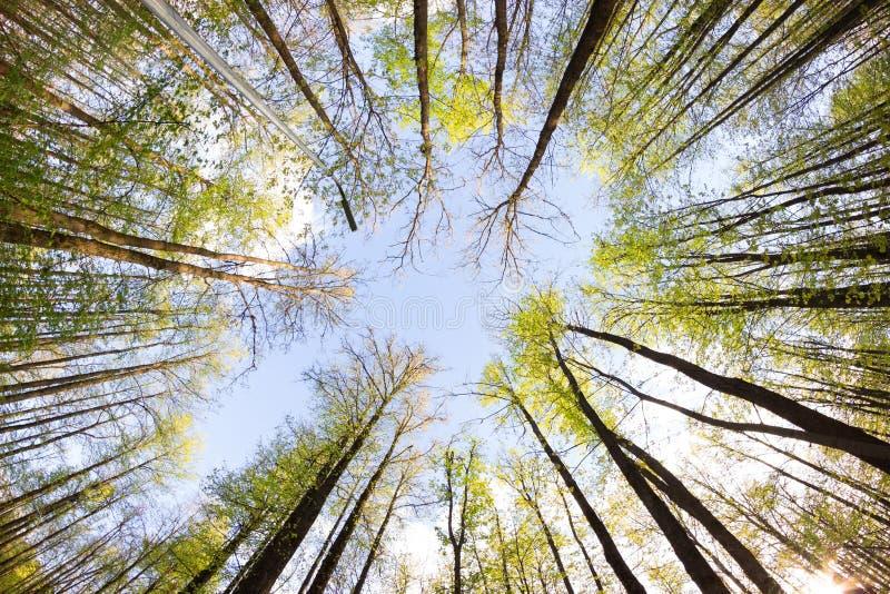Взгляд на небе от леса стоковые изображения rf