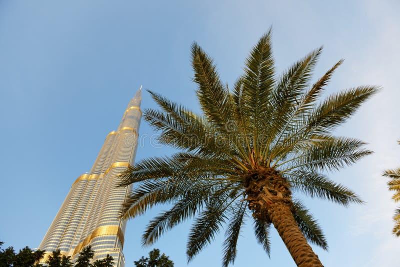 Взгляд на небоскребе Burj Khalifa в заходе солнца и пальме стоковая фотография