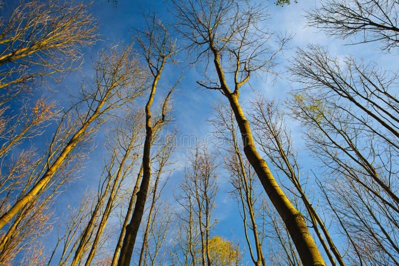 Взгляд неба через деревья леса в осени стоковая фотография