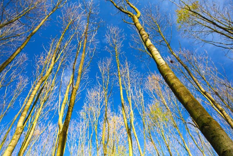 Взгляд неба через деревья леса в осени стоковое изображение
