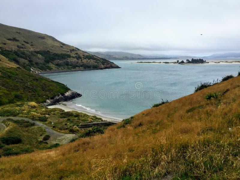 Взгляд ниже от afar на голубой охраняемой природной территории Pukekura пингвинов на пилотах приставает к берегу стоковая фотография rf