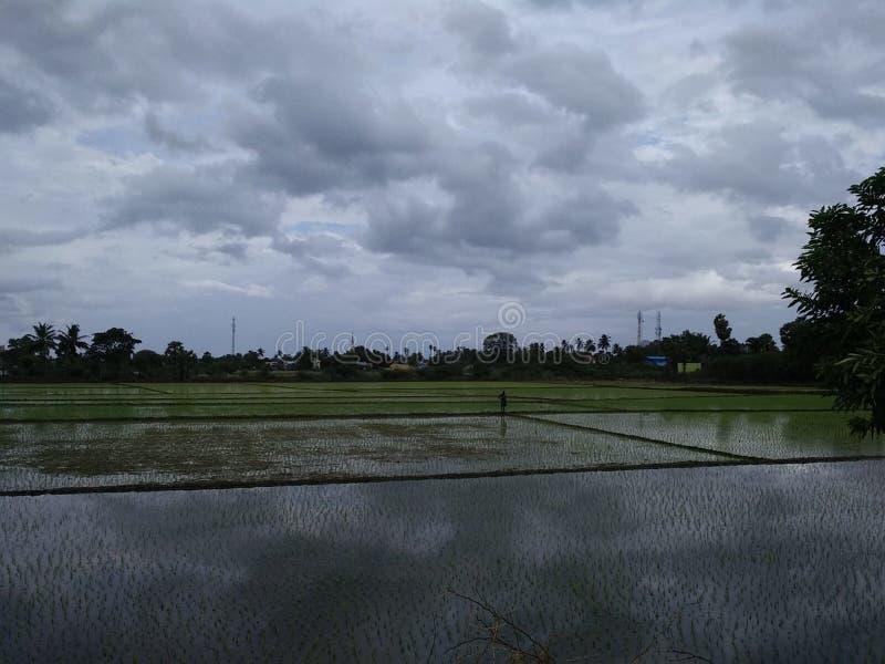 Взгляд ночи культивирования риса в tirunelveli, tamilnadu стоковая фотография rf