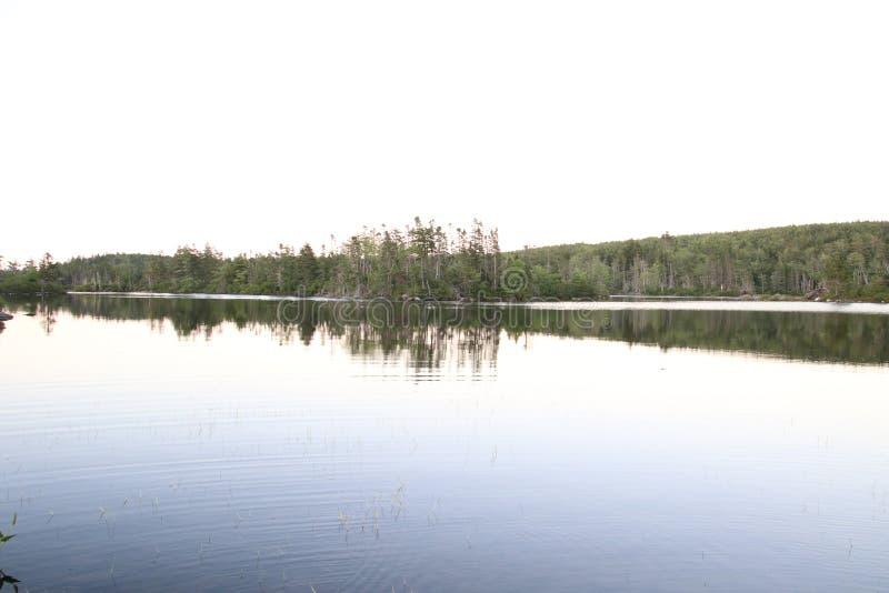 Взгляд озера с лесом на далекой стороне стоковое фото rf