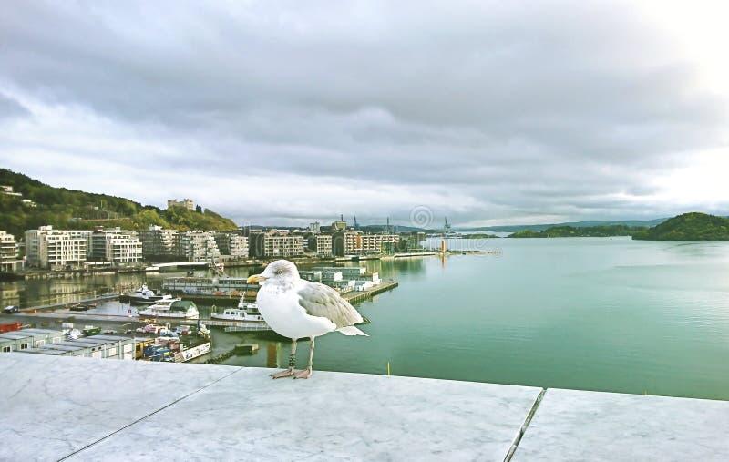 Взгляд Осло и Балтийского моря от смотровой площадки оперного театра, Норвегии стоковые изображения