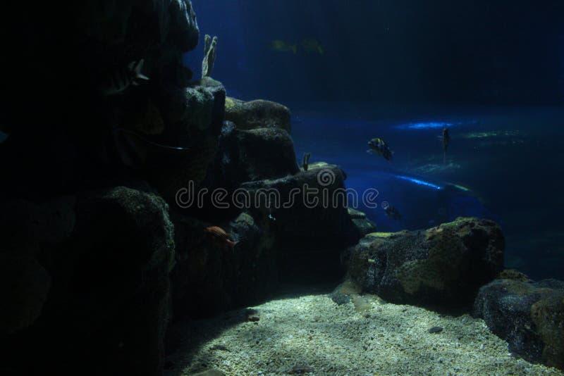 Взгляд от глубоко океана стоковое изображение