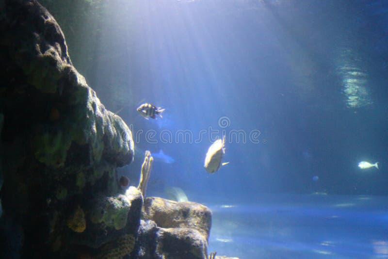 Взгляд от глубоко океана стоковое фото rf