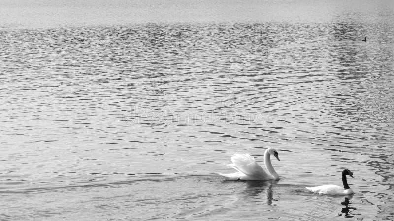 Взгляд от края озера стоковая фотография rf