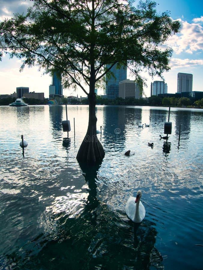 Взгляд от края озера стоковые фото
