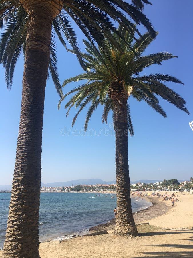 Взгляд пальмы пляжа Salou стоковые фотографии rf