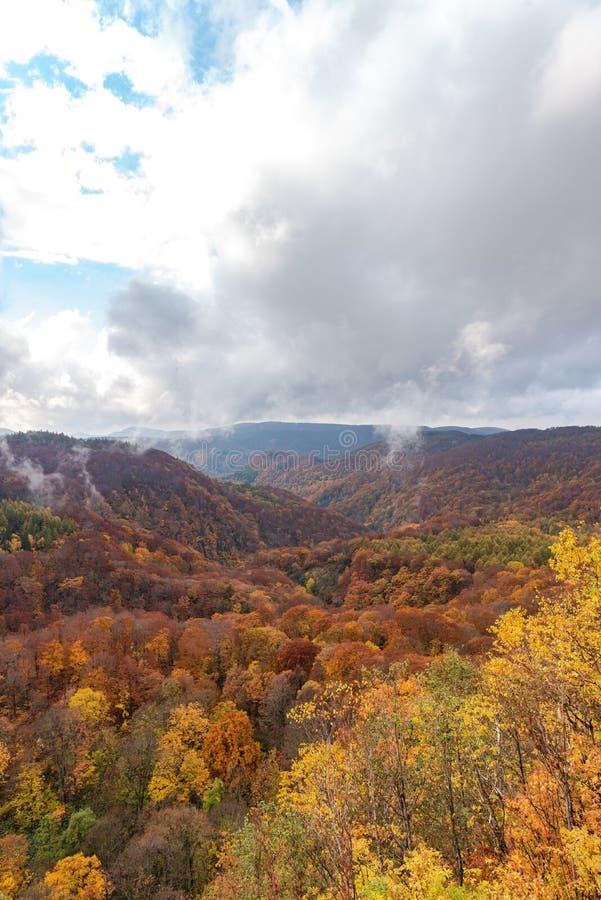 Взгляд пейзажа листвы осени, красивые ландшафты стоковое изображение rf