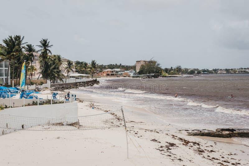 Взгляд пляжа на южном береге Барбадос плохо повлиянных на морской водорослью стоковые изображения