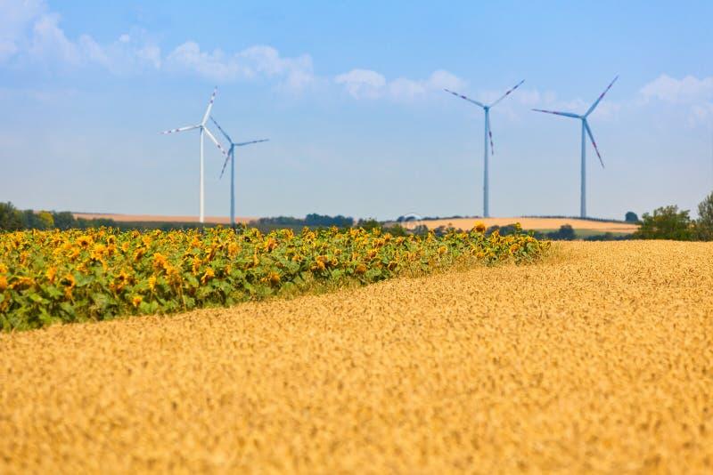 Взгляд полей хлопьев и солнцецветов стоковое изображение rf