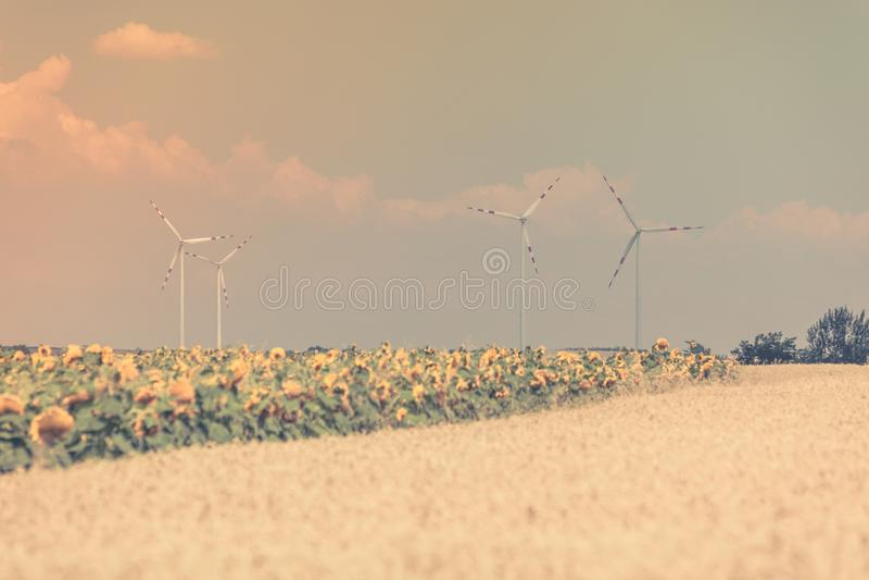 Взгляд полей хлопьев и солнцецветов стоковое изображение