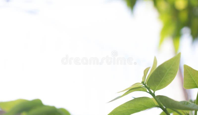 Взгляд природы крупного плана зеленых лист на запачканной предпосылке в garde стоковое фото rf