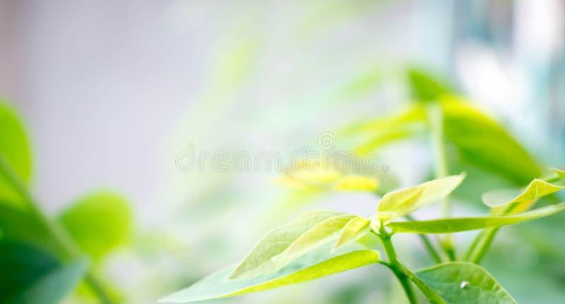 Взгляд природы крупного плана зеленых лист на запачканной предпосылке в garde стоковая фотография