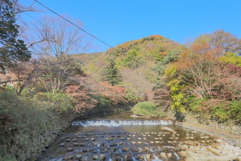 взгляд природы Kamitakano Higashiyama на падении стоковое изображение rf