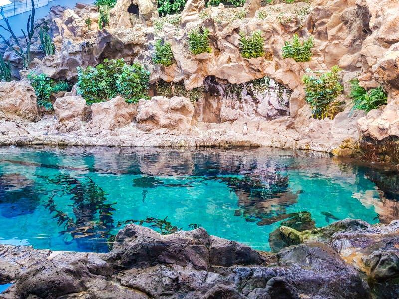 Взгляд пруда с рыбами окруженными искусственными утесами и растительностью стоковые фото