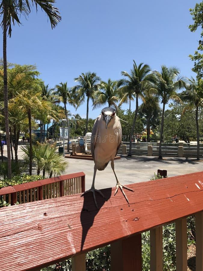 Взгляд птицы и ящерицы на одине другого стоковое фото