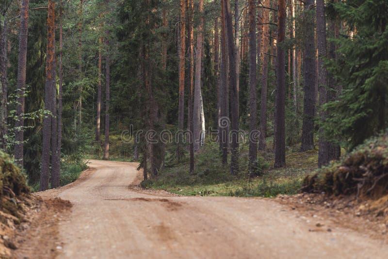 Взгляд пути дороги леса туристского, возглавлять более глубокий в древесинах на солнечный летний день, отчасти неясное изображени стоковое фото