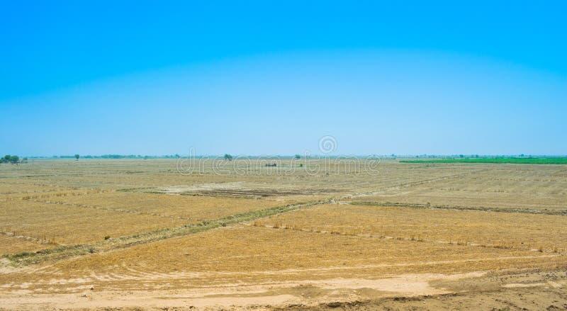 Взгляд пшеничного поля после сбора в rahim yar khan, Пакистане стоковая фотография