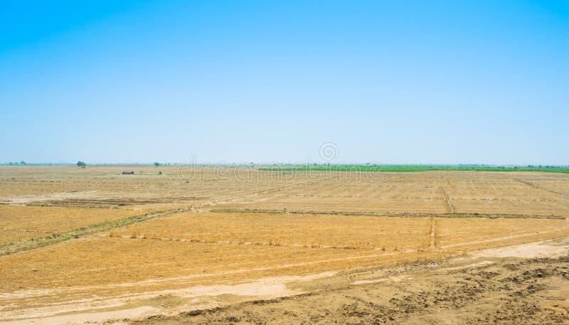 Взгляд пшеничного поля после сбора в rahim yar khan, Пакистане стоковое фото