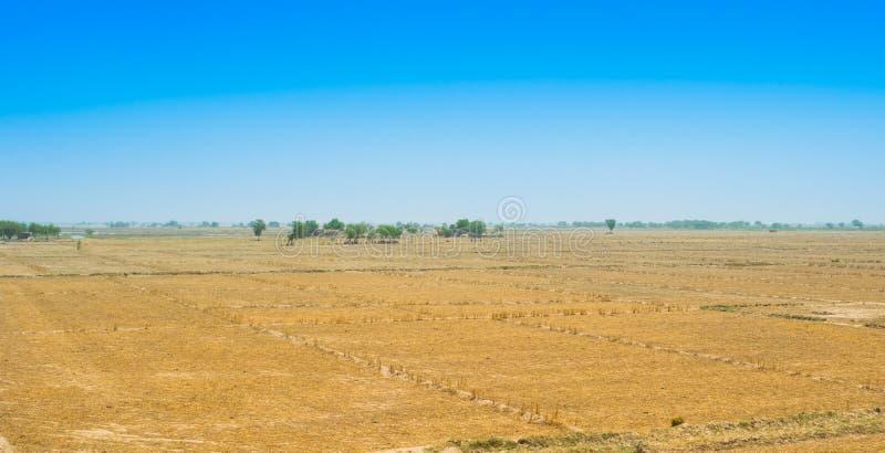 Взгляд пшеничного поля после сбора в rahim yar khan, Пакистане стоковое фото rf