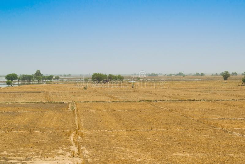 Взгляд пшеничного поля после сбора в rahim yar khan, Пакистане стоковая фотография rf