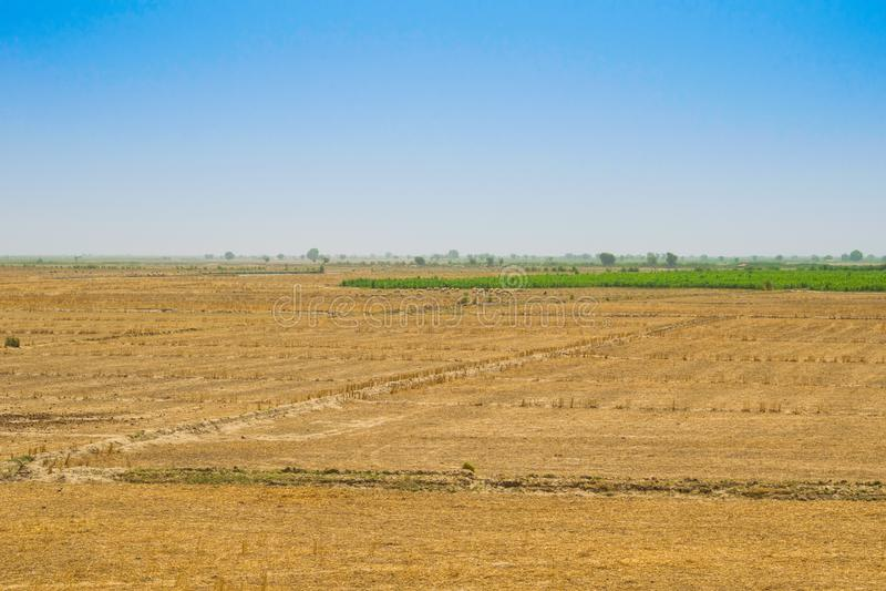 Взгляд пшеничного поля после сбора в rahim yar khan, Пакистане стоковое изображение